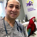 Mississauga Animal Hospital
